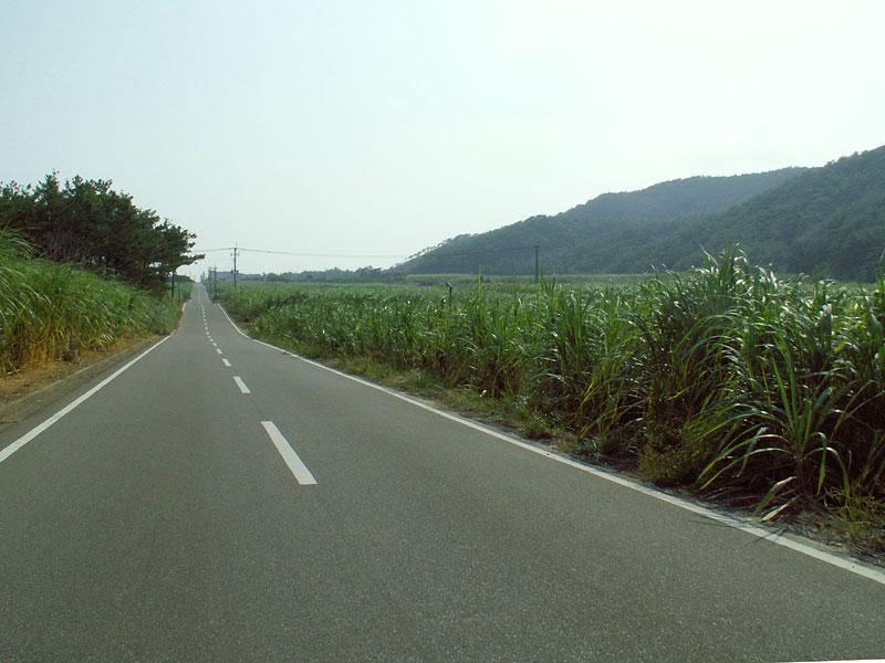 06.10笠利直線道とサトウキビ畑