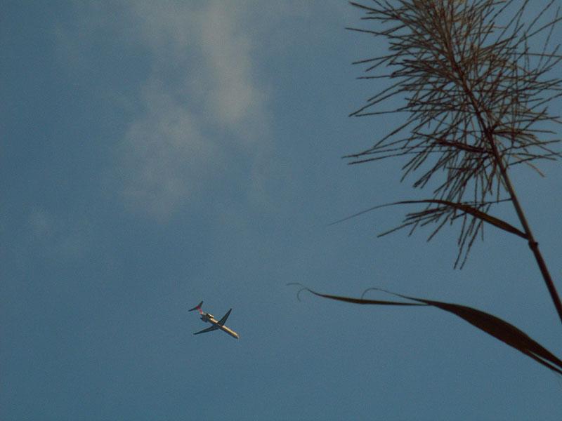 07.01サトウキビと飛行機