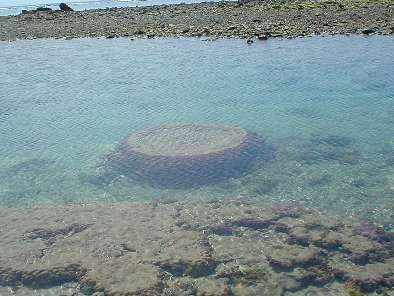 070422小浜の珊瑚